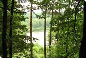 Blick auf den Waldsee