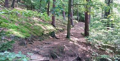 Urwaldsteig Jägerstieg